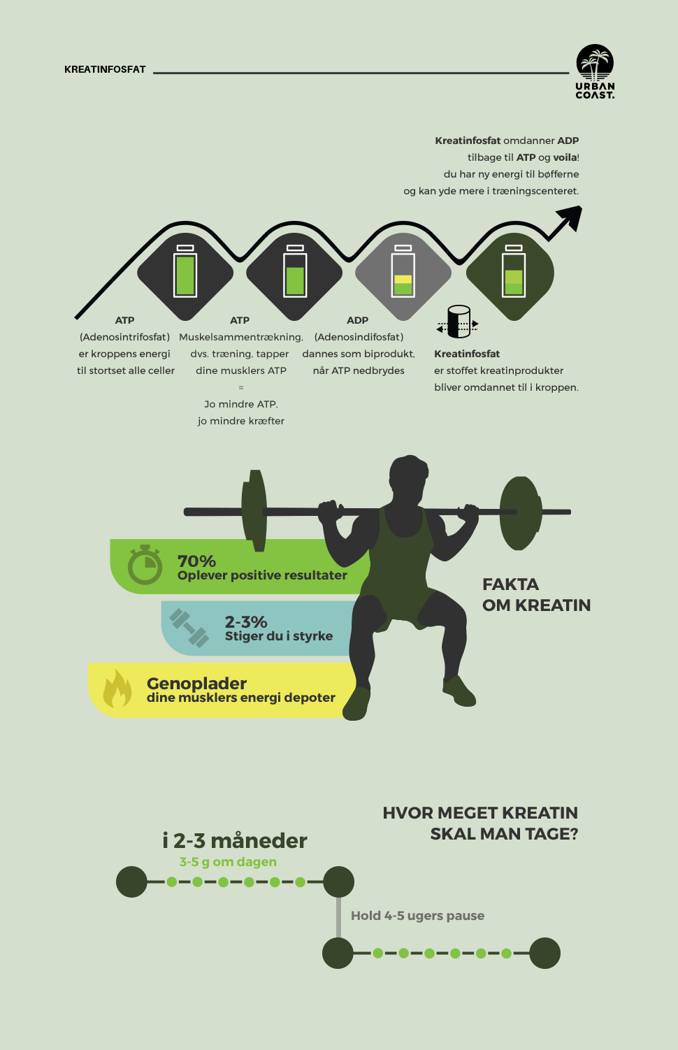 kreatin infografik urbancoast.dk